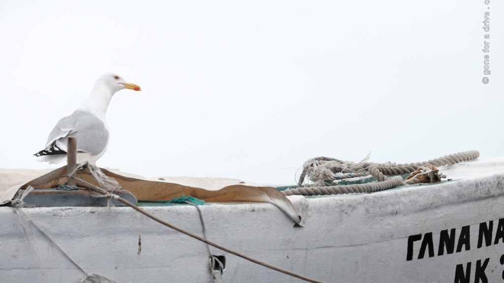 Möwe auf Fischerboot in Kavala, Griechenland.