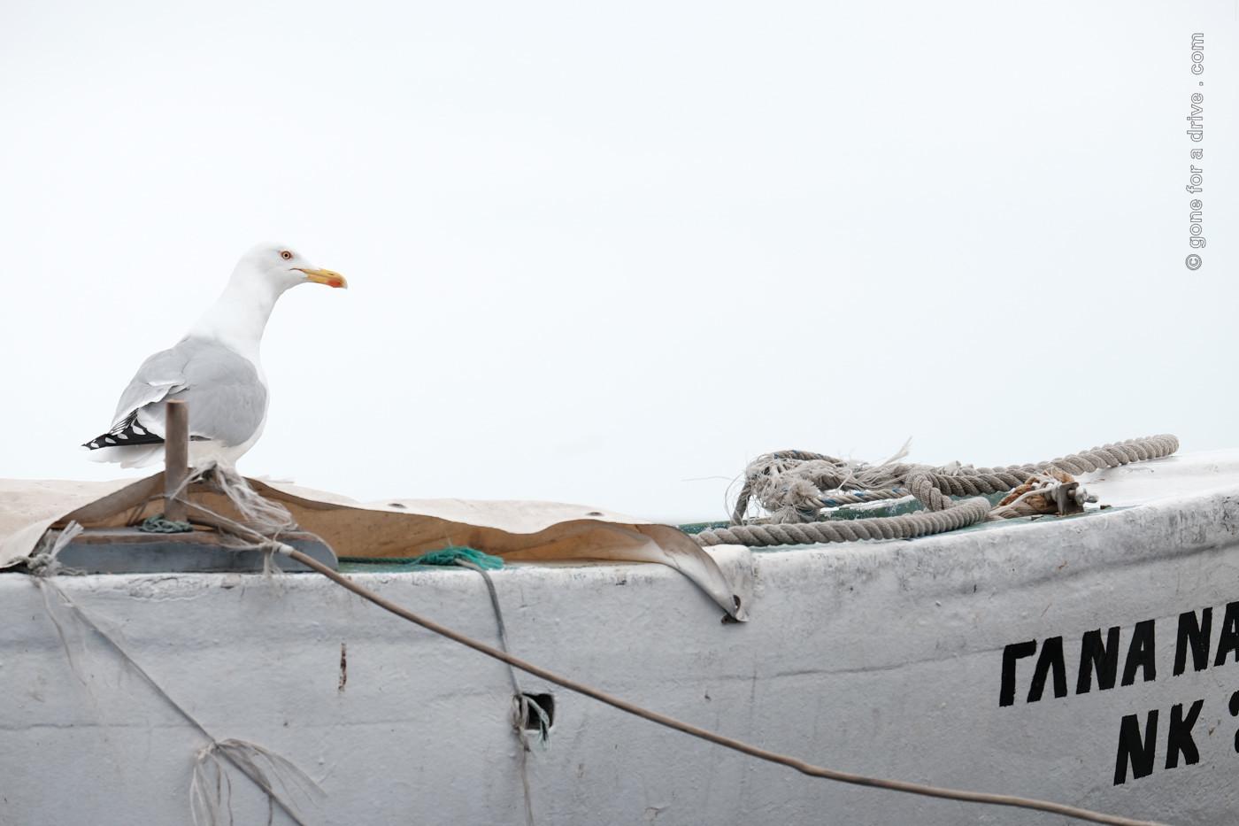 Möwe auf einem weißen Boot vor weißem Himmel. In Kavala, Griechenland.