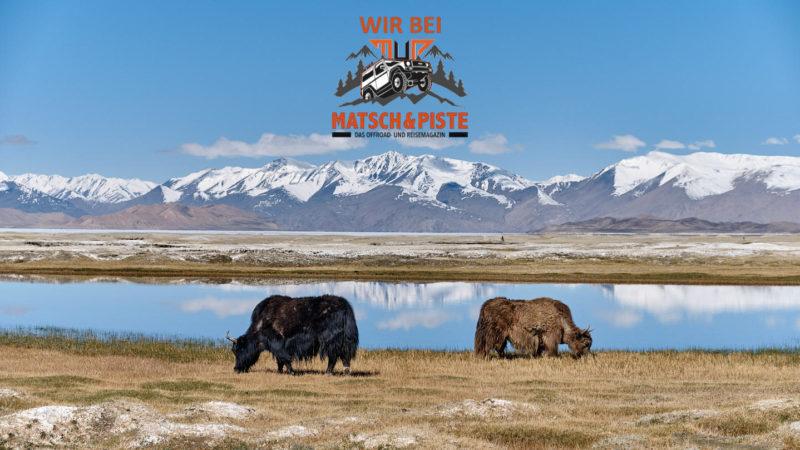 Yaks auf dem Pamir Highway, Tadschikistan
